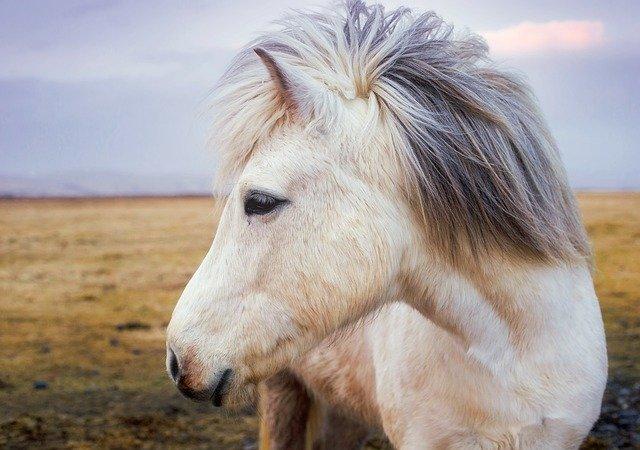 Har du styr på dyretransport af heste til udlandet?