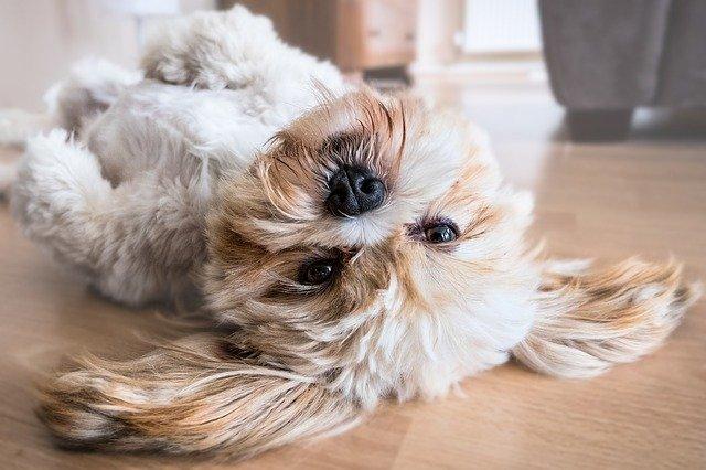 Find den bedste hundeseng til din bedste ven
